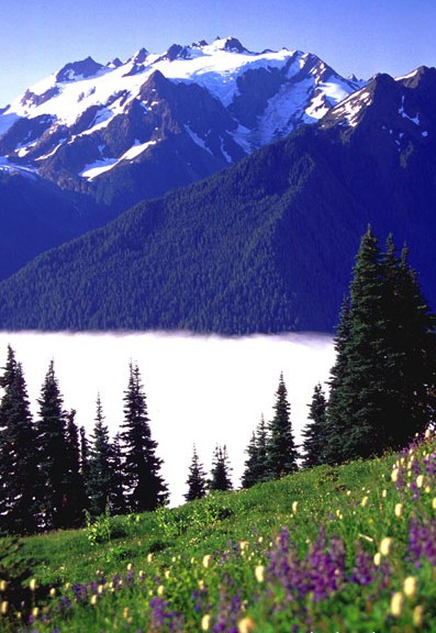 Mount Olympus, Washington.  How's the view from there now, sweet Dave?  We miss you!
